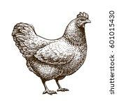 Hand Drawn Chicken  Hen....