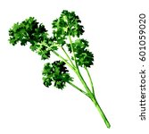 fresh green parsley isolated ... | Shutterstock . vector #601059020