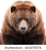 Brown Bear Isolated On White...