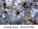 bee pollinating almond tree... | Shutterstock . vector #601124780