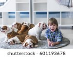 Stock photo gay boy and puppies of the english bulldog playing on the carpet floor 601193678
