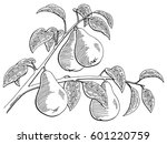 pear fruit graphic branch black ... | Shutterstock .eps vector #601220759