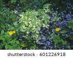 astrantia    sunningdale... | Shutterstock . vector #601226918