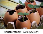 Seedlings Grow In The Eggshell...