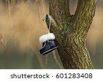 lost children shoes hanging... | Shutterstock . vector #601283408