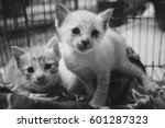 two abandoned kittens with sad... | Shutterstock . vector #601287323