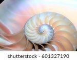 Nautilus Shell Symmetry Cross...