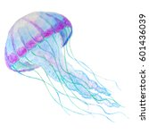 jellyfish isolated n white... | Shutterstock . vector #601436039