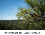 Pine Cone  Pine Tree On Stone...