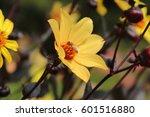 bee   Shutterstock . vector #601516880