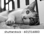cat | Shutterstock . vector #601516883