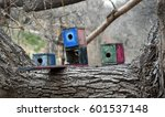 Small photo of Three colorful boxlike birdhouses on a thick horizontal branch