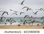 the flight of seagulls over a... | Shutterstock . vector #601580858