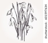 bouquet of snowdrops. set.... | Shutterstock .eps vector #601597634