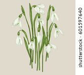 bouquet of snowdrops. set.... | Shutterstock .eps vector #601597640