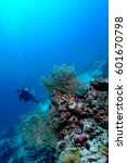 Small photo of dangerously beautiful aceh indonesia scuba diving