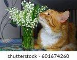 Beautiful Fur Orange Cat Smell...