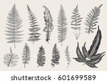 set ferns. 12 leaves. vintage... | Shutterstock .eps vector #601699589