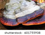 Red Band Fungus Growing On A...