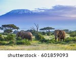 elephants and kilimanjaro | Shutterstock . vector #601859093
