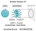 surface tension physics lesson... | Shutterstock .eps vector #601860536