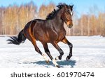 Stock photo horse galloping snow 601970474