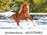 Horse Galloping On Snow At...