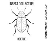 beetle insect geometric lines... | Shutterstock . vector #602025869