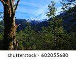 nature | Shutterstock . vector #602055680