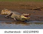 animal in the river. portrait... | Shutterstock . vector #602109890