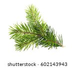 pine branch isolated on white... | Shutterstock . vector #602143943