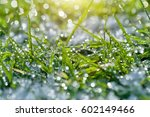 fresh green grass with water... | Shutterstock . vector #602149466