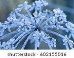 frozen flower  shallow focus.... | Shutterstock . vector #602155016