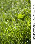 Small photo of Dewey Grass Vibrant Green