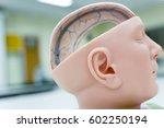 model brain human respiratory...   Shutterstock . vector #602250194