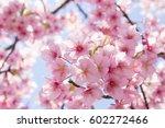 cherry blossoms | Shutterstock . vector #602272466