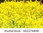 canola flower | Shutterstock . vector #602274848