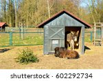 Two Donkeys Resting In A...