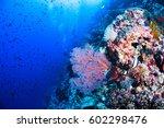 undersea  underwater life  fish ... | Shutterstock . vector #602298476