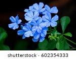blue flowers | Shutterstock . vector #602354333