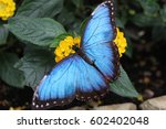 Stock photo butterfly 602402048
