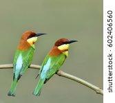 beautiful birds the couple of...   Shutterstock . vector #602406560
