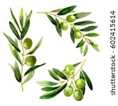 olive tree in a watercolor... | Shutterstock . vector #602415614