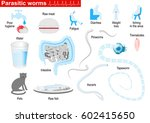parasitic worms. helminths are... | Shutterstock .eps vector #602415650