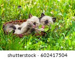 Stock photo two little kittens wearing bow tie lying in a basket on the grass in summer 602417504