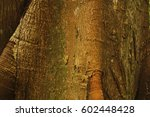 trunk of a majestic ceiba ... | Shutterstock . vector #602448428