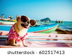 cute chihuahua dog wearing... | Shutterstock . vector #602517413