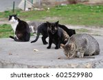 A Group Of Street Cats Sniffin...
