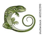 realistic green lizard. the... | Shutterstock .eps vector #602532590