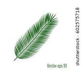 palm leaf vector illustration.   Shutterstock .eps vector #602575718